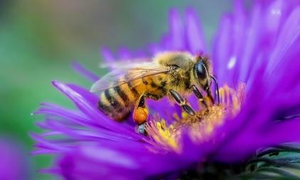 FINAL_Bees